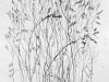 untitled sketch, Grasses